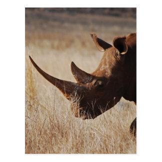 Rinoceronte negro africano con los cuernos grandes tarjeta postal