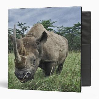 Rinoceronte negro, bicornis del Diceros, Kenia