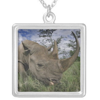 Rinoceronte negro bicornis del Diceros Kenia Joyerias Personalizadas
