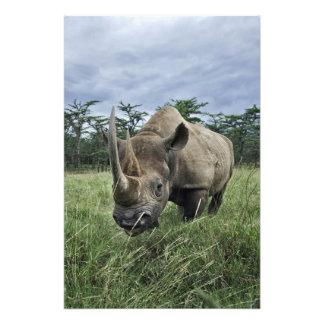 Rinoceronte negro, bicornis del Diceros, Kenia Fotografía