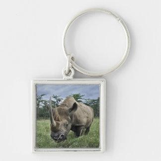 Rinoceronte negro, bicornis del Diceros, Kenia Llaveros