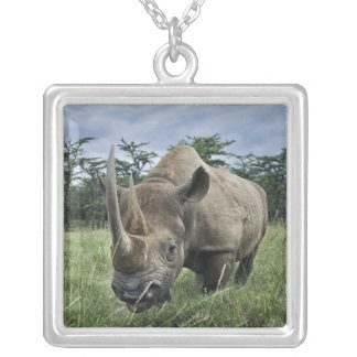 Rinoceronte negro bicornis del Diceros Kenia Collares Personalizados