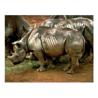 Rinoceronte negro tarjetas postales
