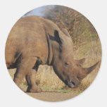 Rinoceronte Pegatina Redonda