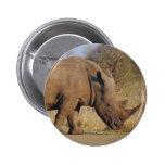 Rinoceronte Pins