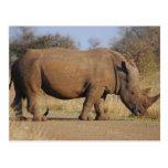 Rinoceronte Postal