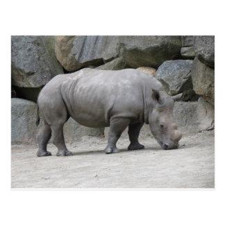 rinoceronte postales