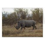 Rinoceronte surafricano tarjetón