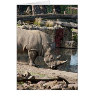 Rinoceronte Tarjeta