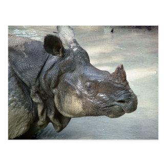 Rinoceronte Tarjeta Postal