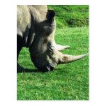 Rinoceronte Tarjetas Postales