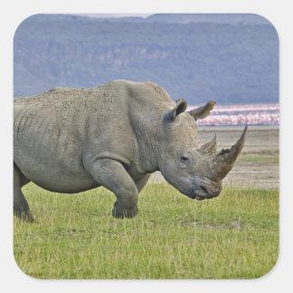 Rinoceronte y distante blancos pocos flamencos, pegatina cuadradas personalizada