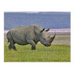 Rinoceronte y distante blancos pocos flamencos, tarjetas postales