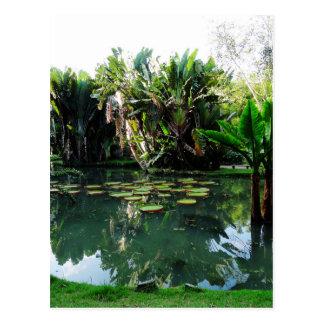 Rio Botanical Garden Postcard