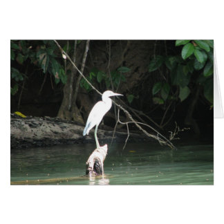 Rio Chagres, Panama Greeting Card