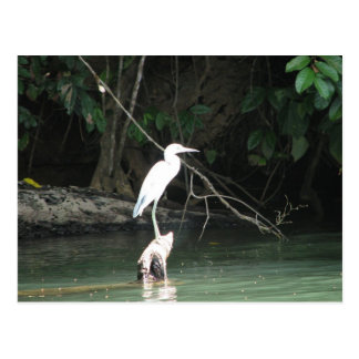Rio Chagres, Panama Postcard