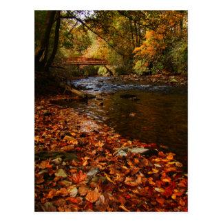 Río de hojas postales