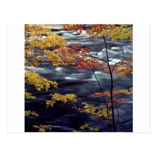 Río de precipitación del otoño A del árbol Postales