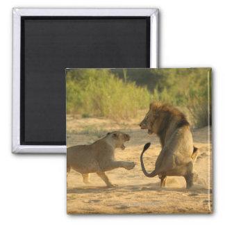 Río de Timbavati, parque nacional de Kruger, el Li Imán Para Frigorifico