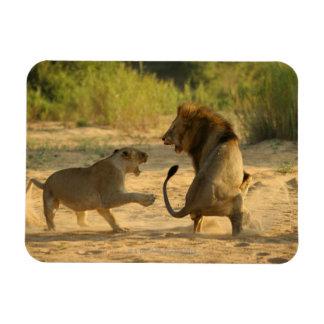 Río de Timbavati, parque nacional de Kruger, el Li Imanes Rectangulares