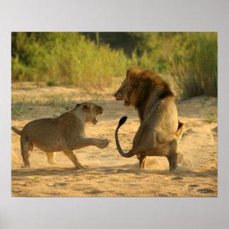 Río de Timbavati, parque nacional de Kruger, el Li Póster