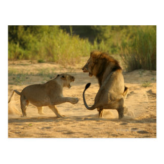 Río de Timbavati, parque nacional de Kruger, el Postal