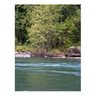 Río de Willamette en el camping negro del barranco Tarjetas Postales