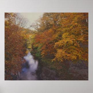 Río del dardo - otoño póster