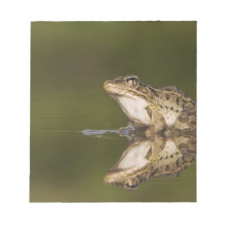 Rio Grande Leopard Frog, Rana berlandieri, adult Memo Note Pads