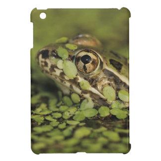 Rio Grande Leopard Frog, Rana berlandieri, Case For The iPad Mini