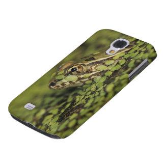 Rio Grande Leopard Frog, Rana berlandieri, Galaxy S4 Cover