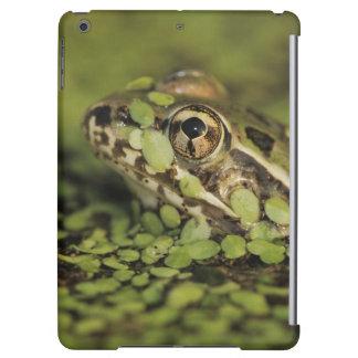 Rio Grande Leopard Frog, Rana berlandieri, iPad Air Case