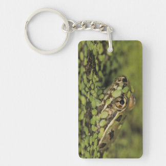 Rio Grande Leopard Frog, Rana berlandieri, Keychain