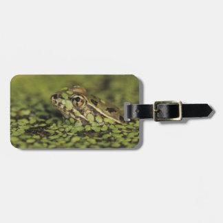 Rio Grande Leopard Frog, Rana berlandieri, Luggage Tag