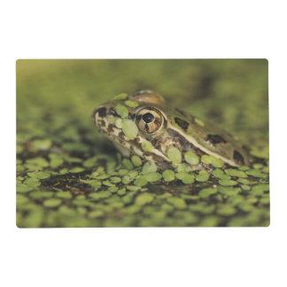 Rio Grande Leopard Frog, Rana berlandieri, Placemat