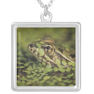 Rio Grande Leopard Frog, Rana berlandieri, Silver Plated Necklace