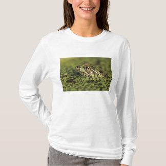 Rio Grande Leopard Frog, Rana berlandieri, T-Shirt
