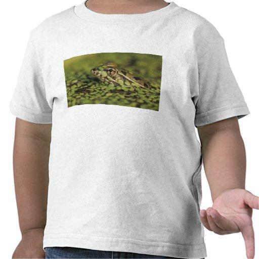 Rio Grande Leopard Frog, Rana berlandieri, Shirt