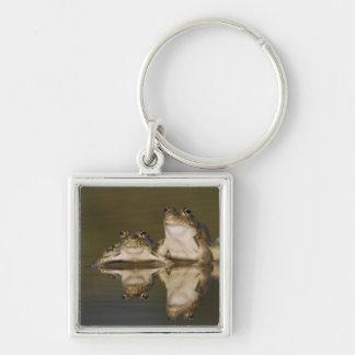 Rio Grande Leopard Frog, Rana berlandieri, two Keychain