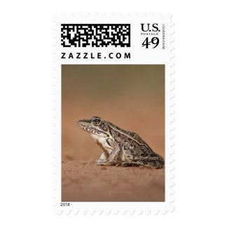 Rio Grande Leopard Frog sunning, Texas 2 Stamp