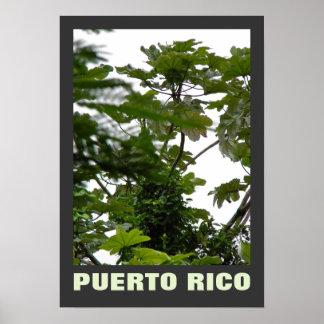 Rio Grande, Puerto Rico Poster