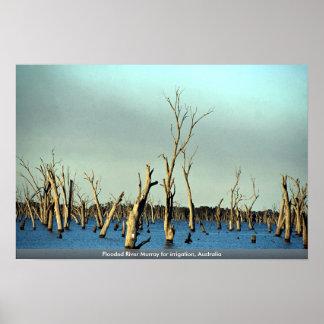 Río inundado Murray para la irrigación, Australia Poster