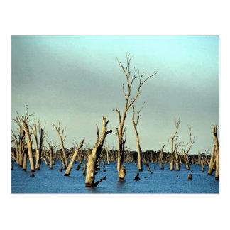 Río inundado Murray para la irrigación, Australia Tarjetas Postales