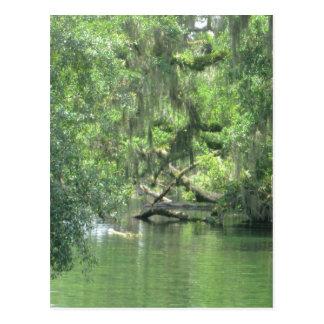 Río la Florida de Blue Springs Tarjetas Postales