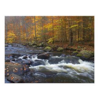 Río negro en el otoño - NJ escénico Impresión Fotográfica