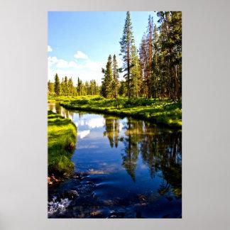 Río tranquilo hermoso del lago en bosque verde