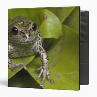 Riobamba Marsupial Frog Gastrotheca Binders