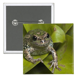 Riobamba Marsupial Frog Gastrotheca 2 Inch Square Button