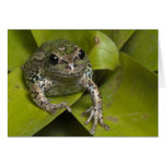 Riobamba Marsupial Frog Gastrotheca Greeting Card