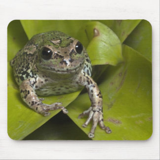 Riobamba Marsupial Frog Gastrotheca Mouse Pad